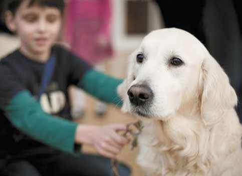 Dog-Assisted Therapy